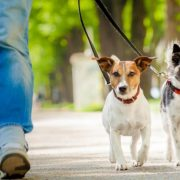 Servizio di Dog sitter Pomezia