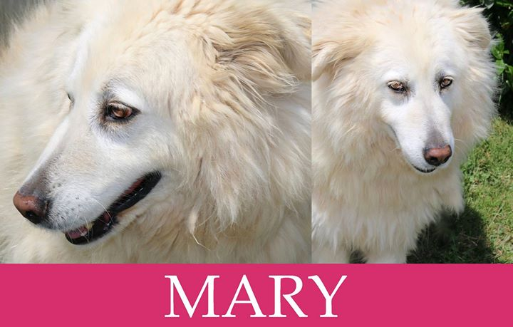 Mary-over 7 anni