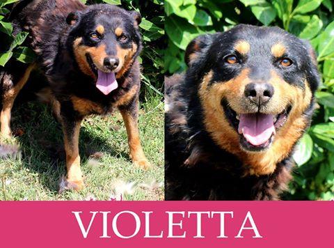 Violetta-over 7 anni