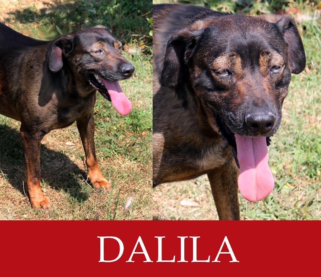 Dalila-over 7 anni