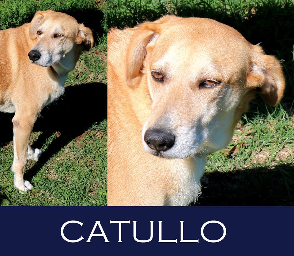 Catullo- over 7 anni