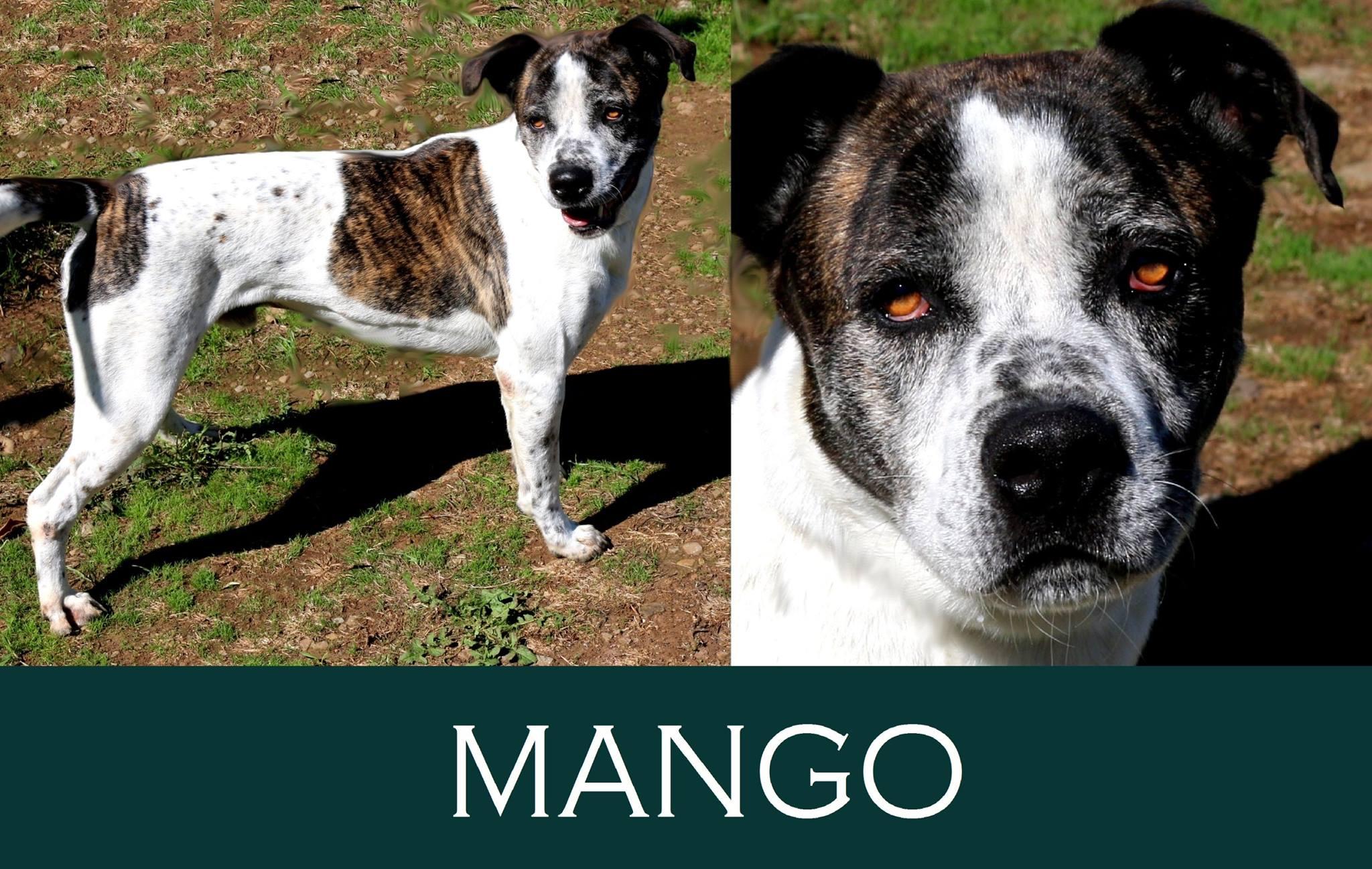 Mango-over 7 anni
