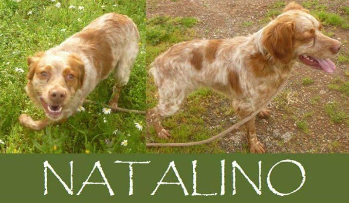 Natalino, un cane da salvare