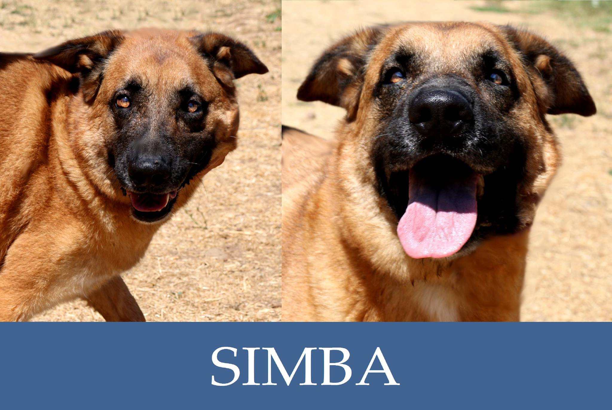 Simba- over 7 anni
