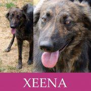 Xeena