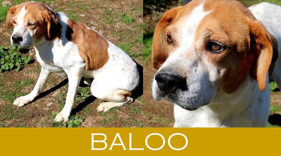 Baloo maril - Cerco piscina fuori terra ...