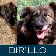 Birillo