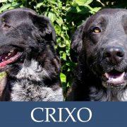 Crixo