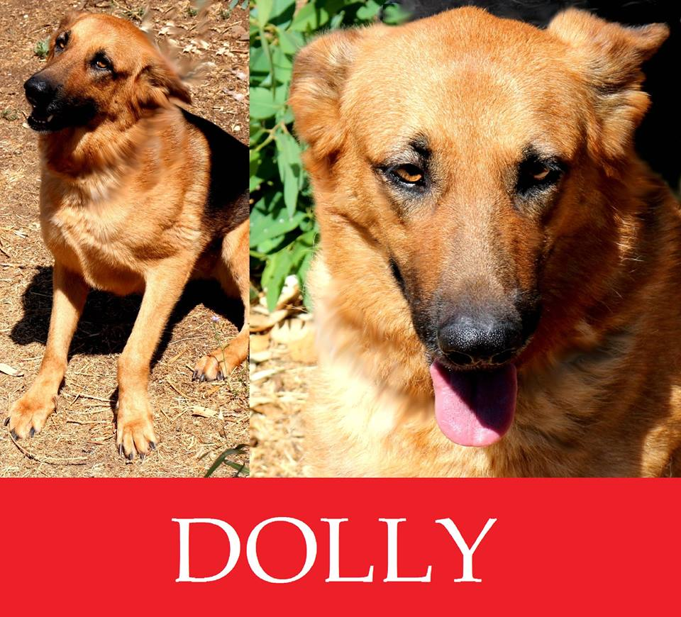 Dolly-over 7 anni