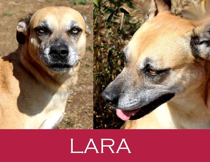 Lara-Adozione cani anziani