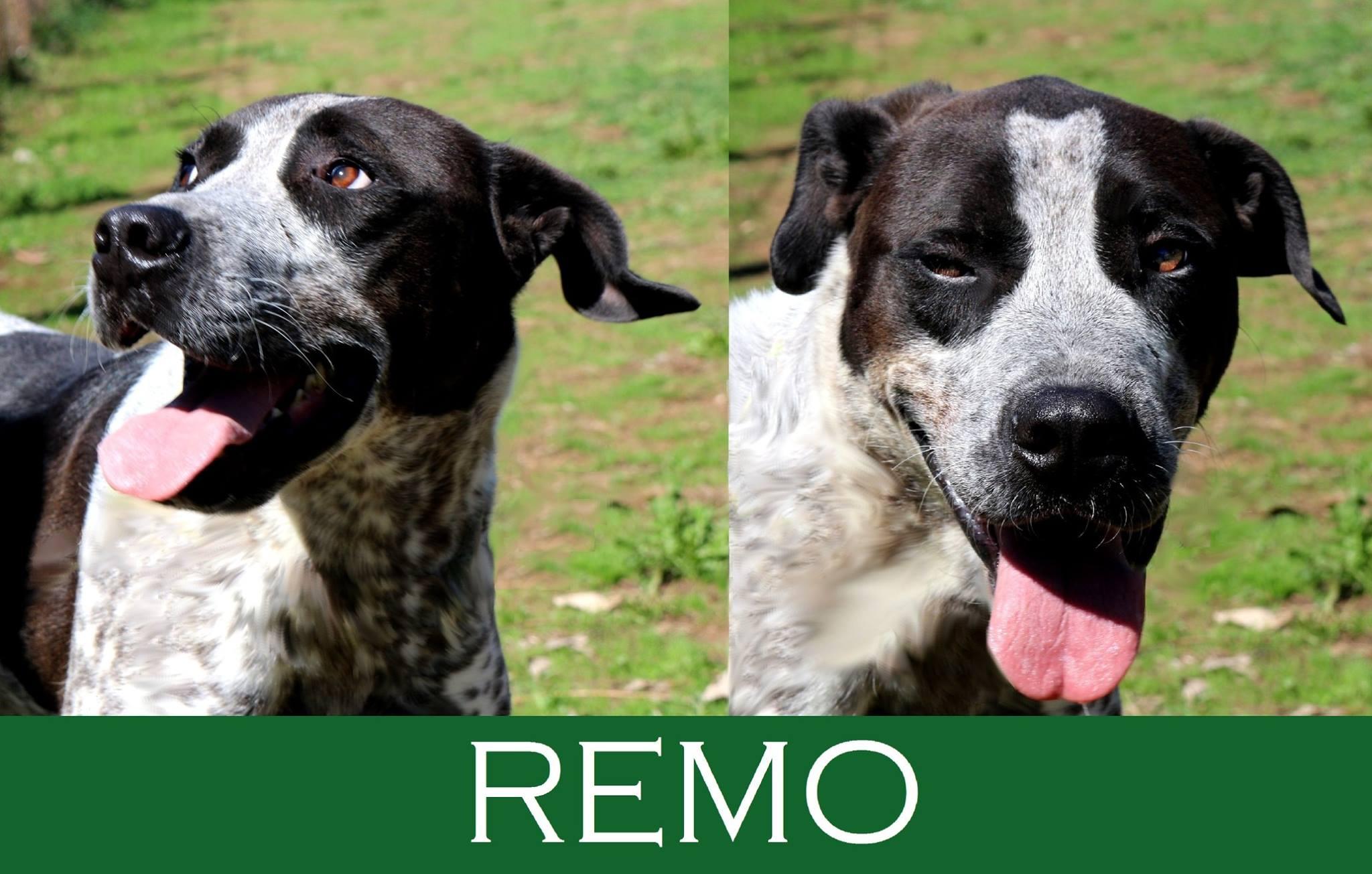Remo- over 7 anni