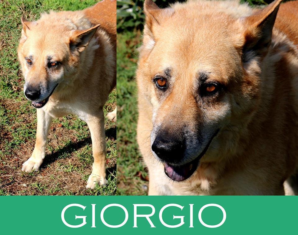 Giorgio ha bisogno di aiuto!!! Adozioni cani anziani