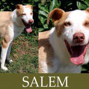 Salem (Indy)