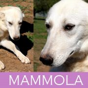 Mammola
