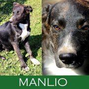 Manlio