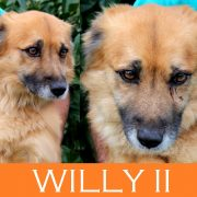 Willy II