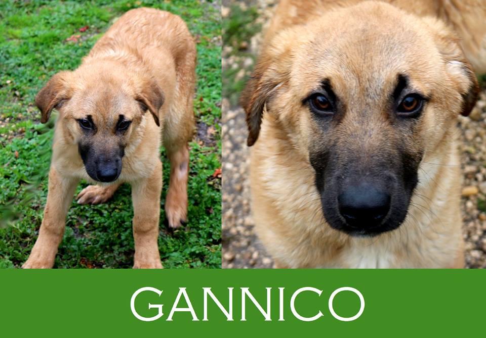 Gannico, il cane che sorride