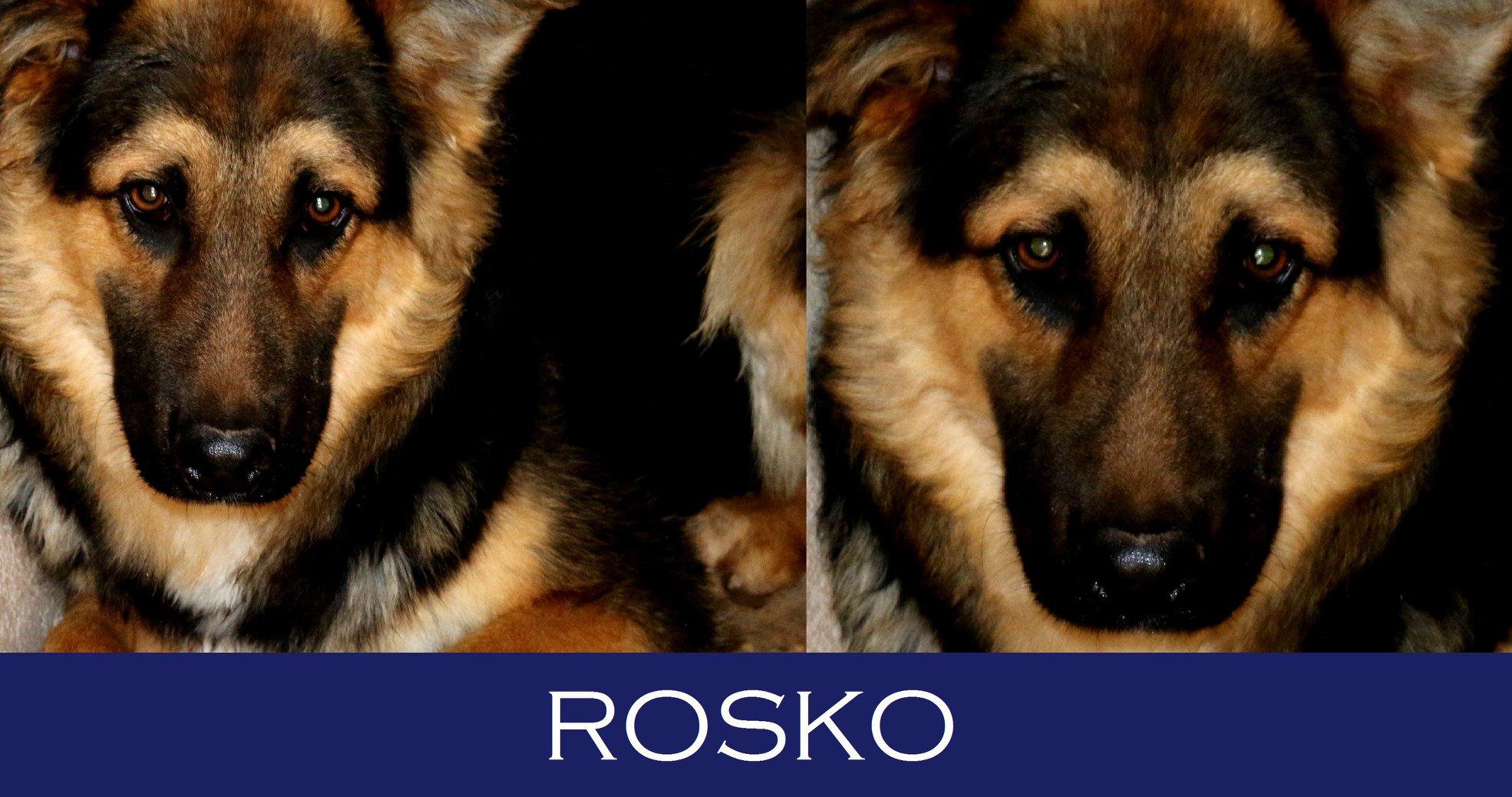 Rosko-Casi speciali