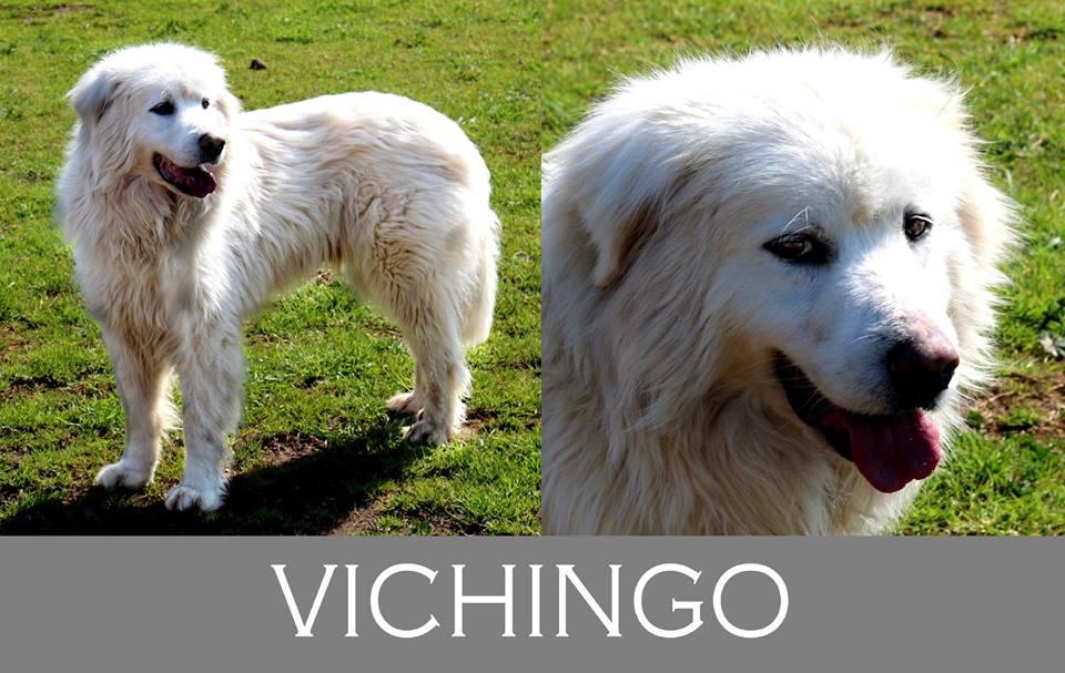 Vichingo- Caso Speciale