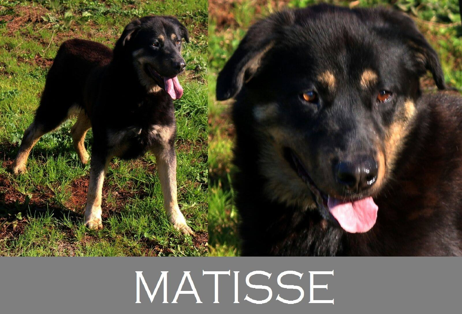 Matisse- Adozioni del cuore