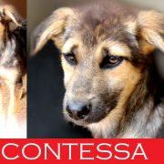 Contessa Caso Speciale