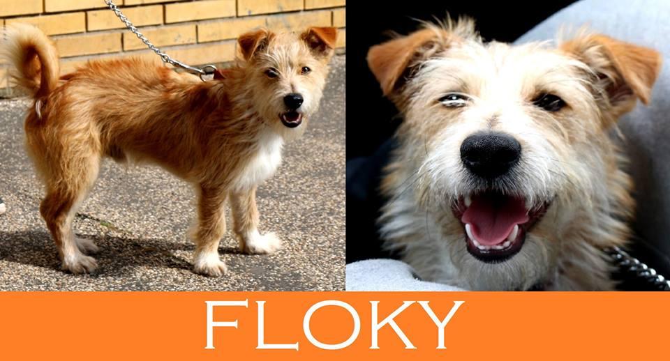 Il piccolo Floky  cerca urgentemente casa!