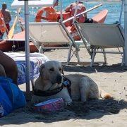 Tutti al  Free Beach, una spiaggia per i nostri amici a Marina di Ardea