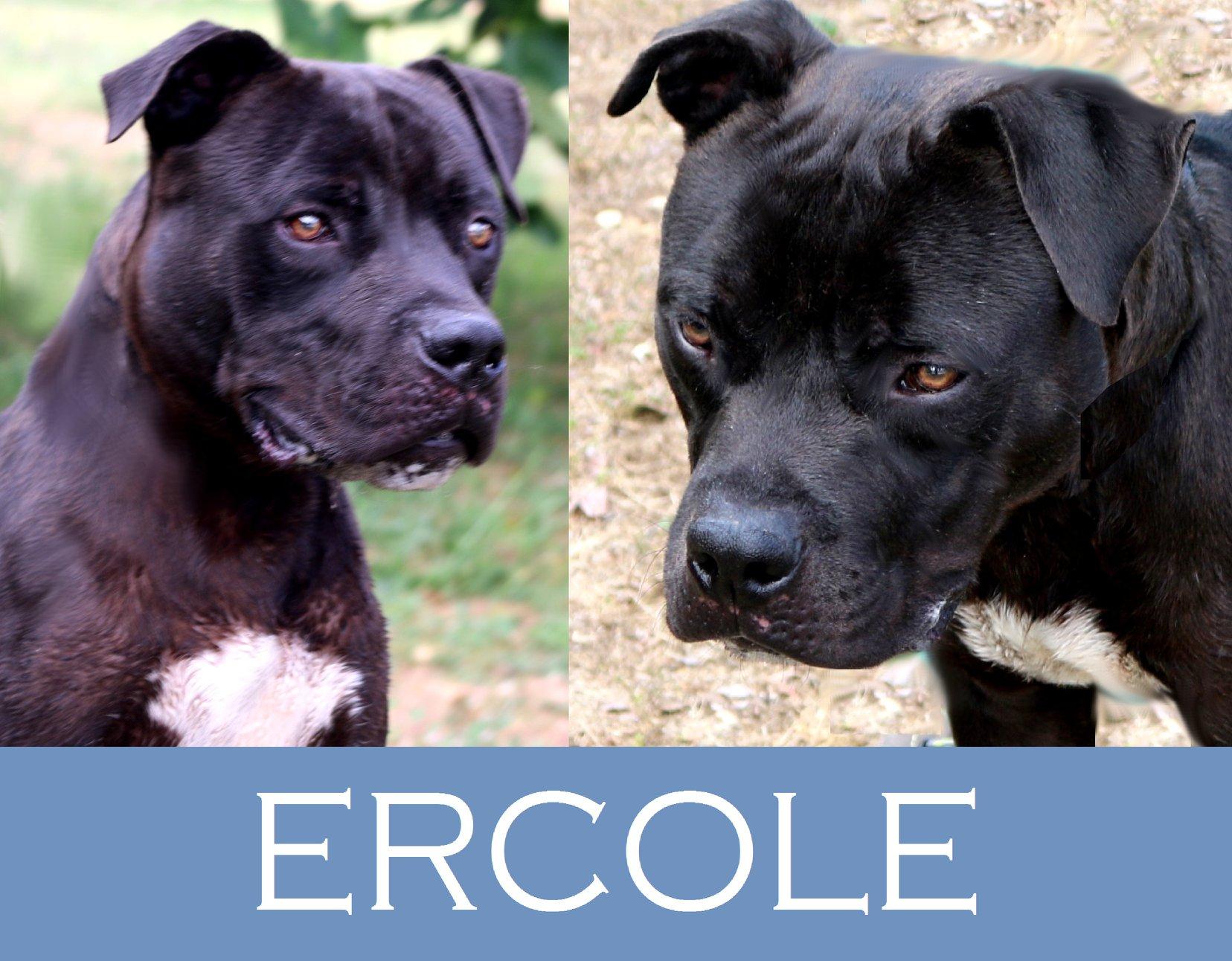 Ercole ha bisogno di aiuto…