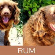 Rum- Adozione del cuore