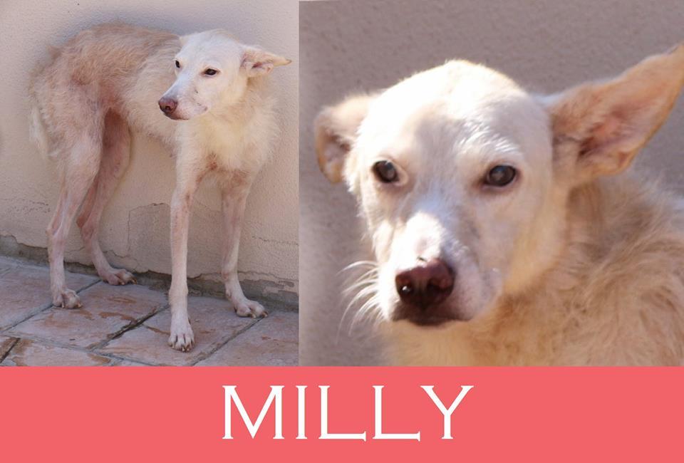 Milly,dal sequestro di Ardea