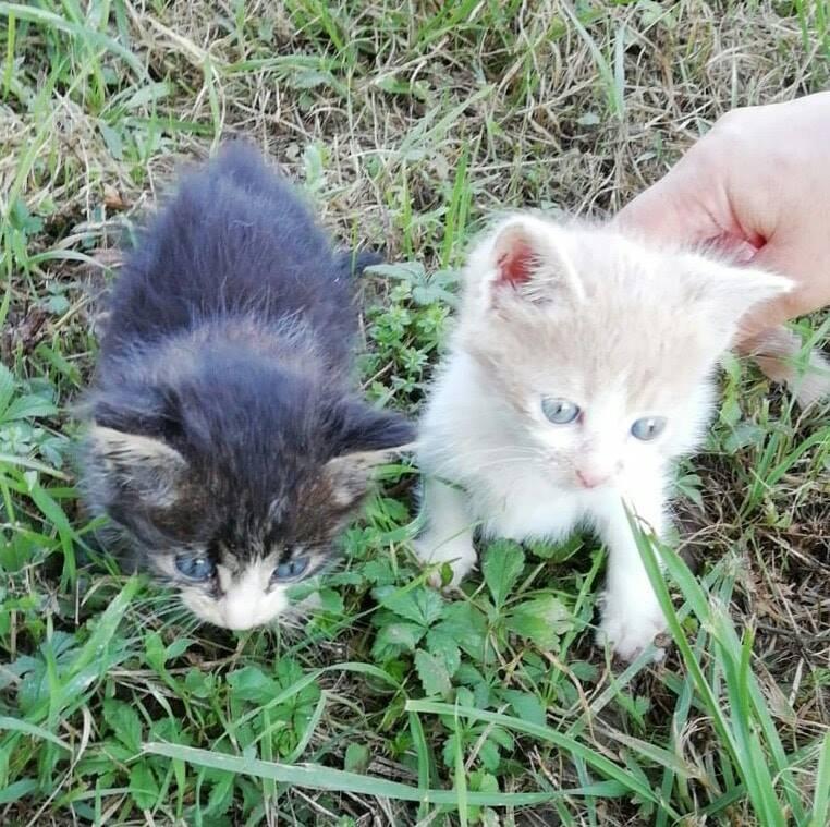 Achille e Clara cercano casa
