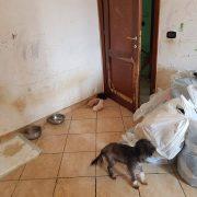 Per aiutare i cani dal sequestro di Ardea