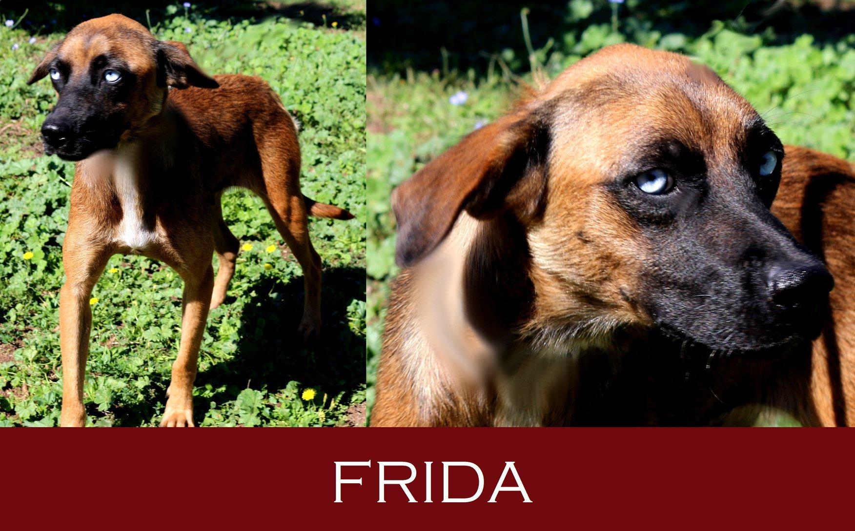 Frida pochi giorni al trasferimento!!!
