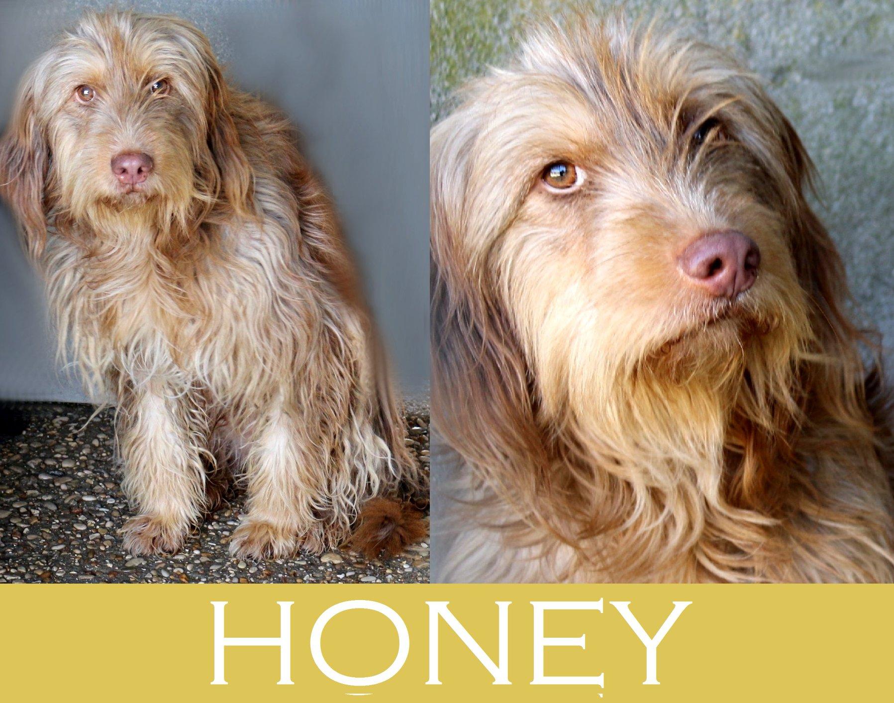 Honey- Caso Speciale