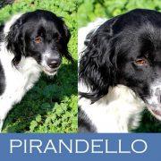 Pirandello