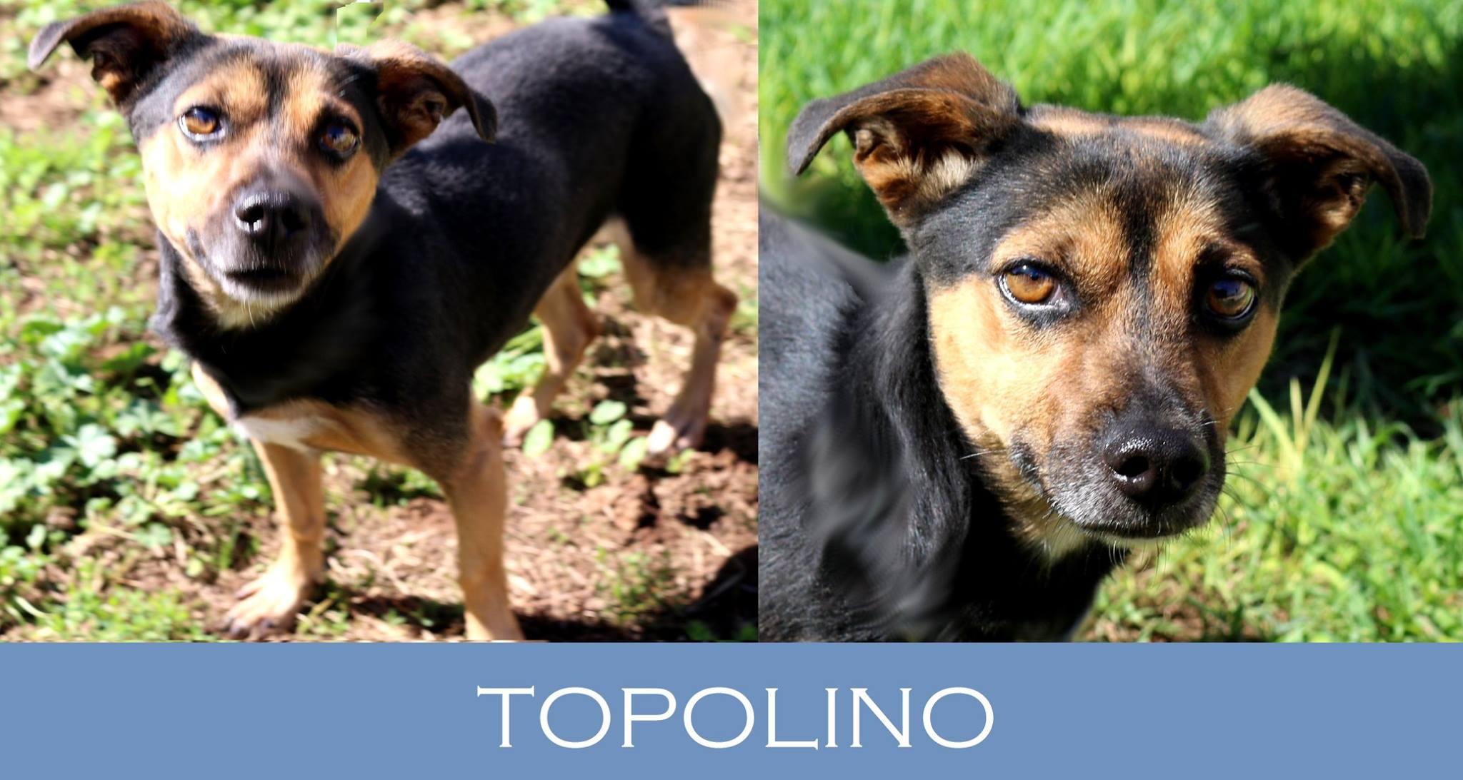 Cerchiamo stallo o adozione per Topolino!