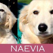 Naevia