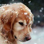 Arriva il freddo, emergenze per cuccioli e cani anziani