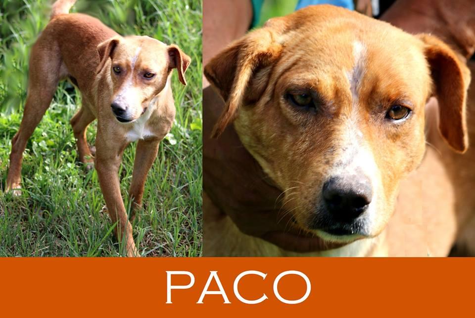 Paco mercoledì sarà trasferito