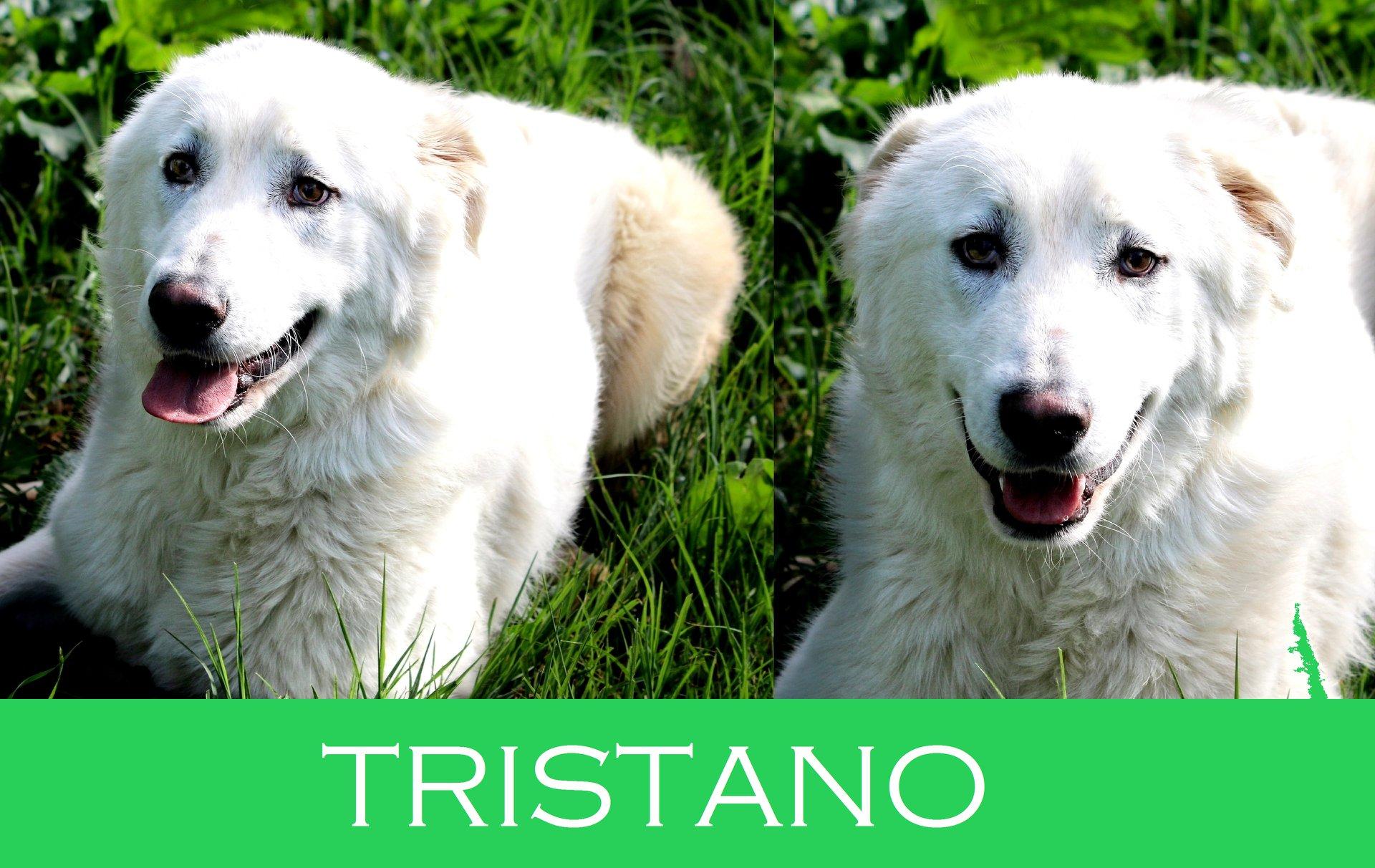 Tristano