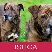 Ischa