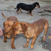 Charlie,Jane,Kitty e tre cucciolini cercano casa