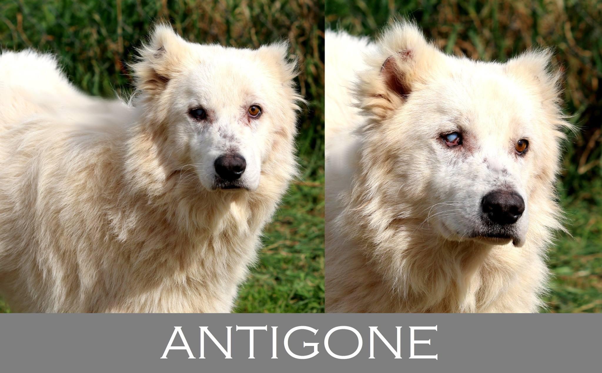 Antigone-Adozione cani anziani