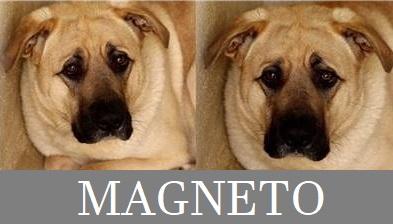 Magneto- Casi  speciali