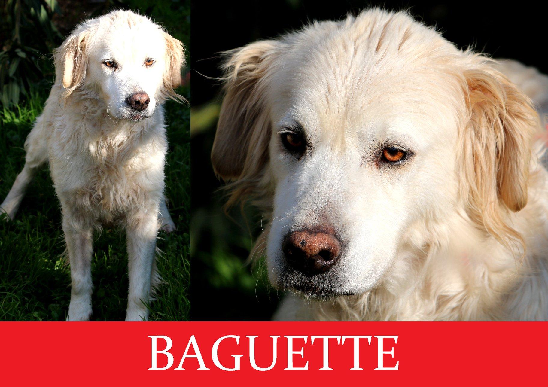 Baguette-Tip.maremmano abruzzese