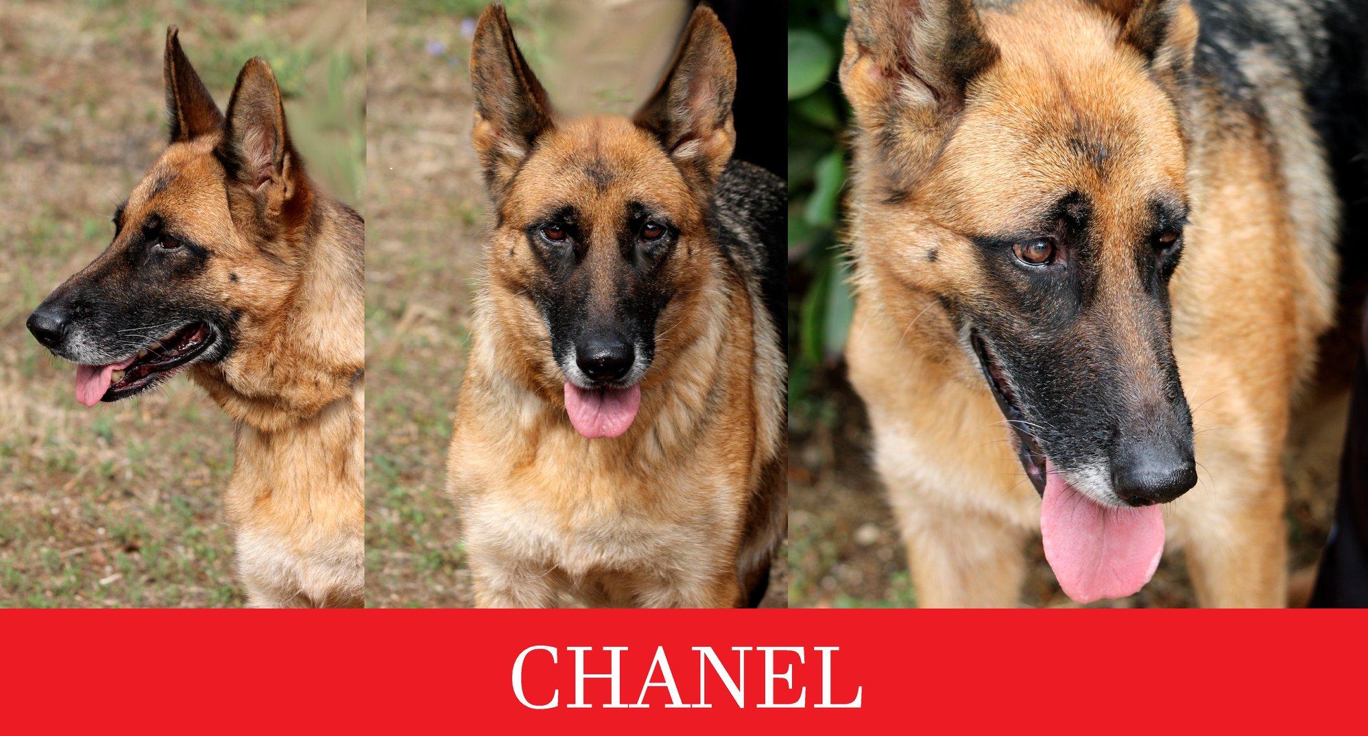 Sos – Chanel cerca casa urgente