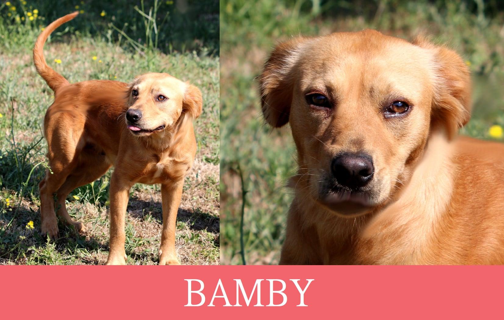 Bamby cerca casa urgente